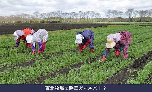 vegetable_04.jpg