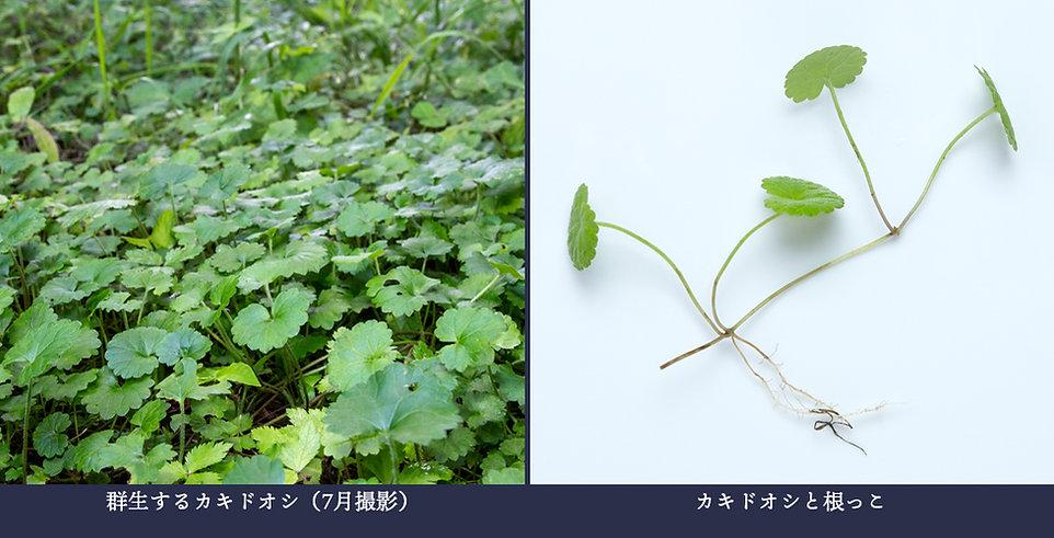 yasou_kakidooshi.jpg