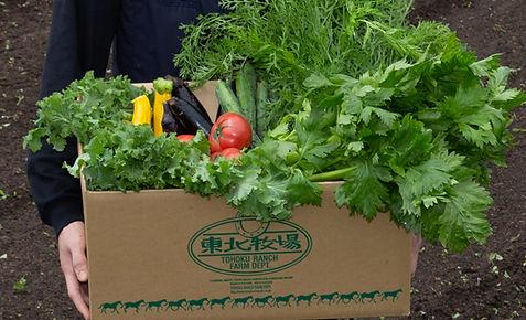 vegetable_07.jpg