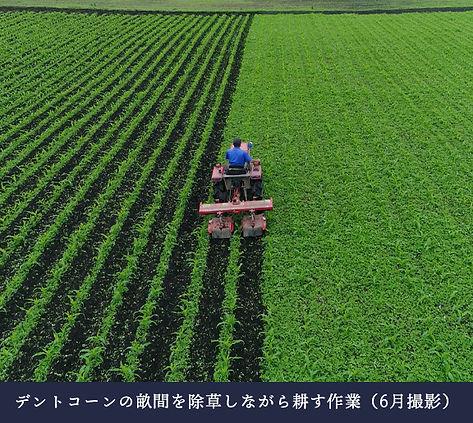 munouyaku_01.jpg