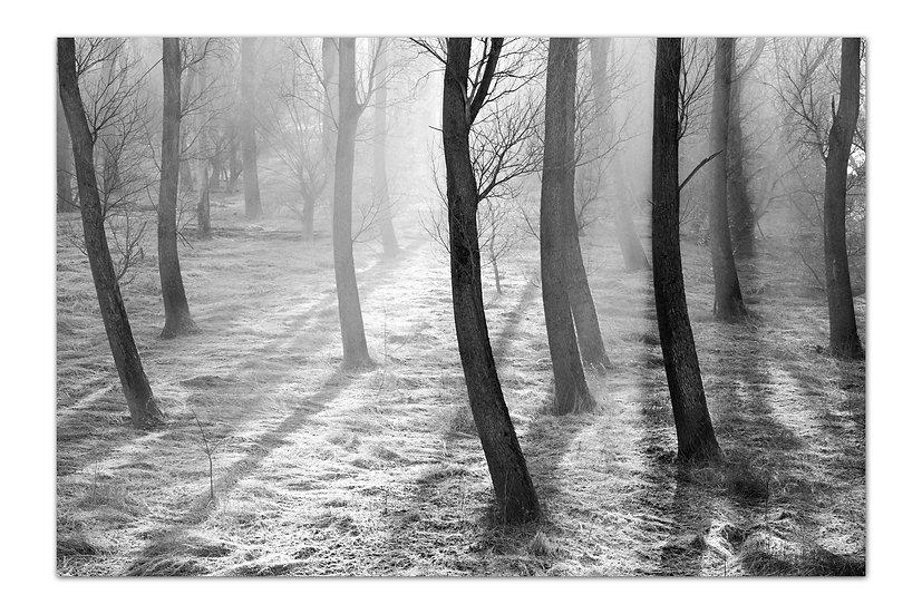 speyer wandbilder, speyer sw fotos, art2 Kunstraum, speyer artikel, fotogeschenke