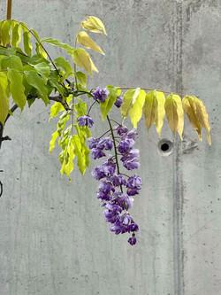 OCL Monte Ramalde - garden detail