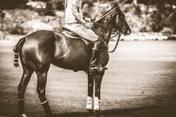 horseback riding in sepia filter
