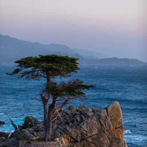 ZeminaZ_SF-Monterey_606.jpg
