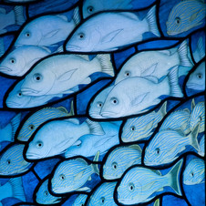 Shoals of fish