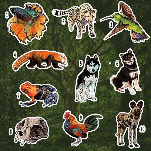 Wildlife Series