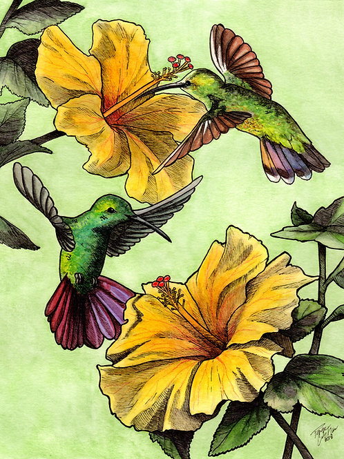 Green Breasted Mango Hummingbirds