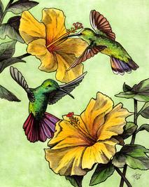 Green brested mango hummingbirds