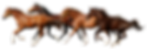 horse-png-24.png
