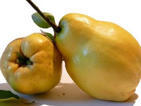 Marmelo - Emagrecedor e Diurético.