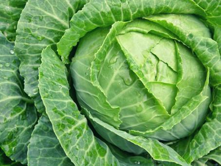Repolho - Previne problemas de Estômago principalmente Gastrite.