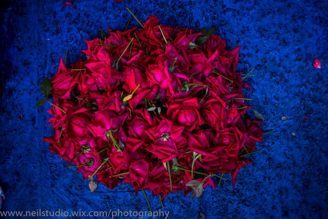 Rose Petals for Sale