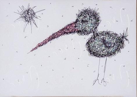 ציפור ורוד-מקור