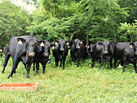 PART 2: Current Cattle Industry Issues and Policy Development