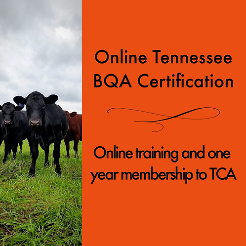 Online Tennessee Beef Quality Assurance Certification