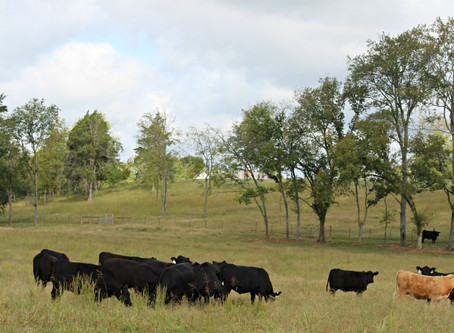 Current Cattle Industry Issues and Policy Development