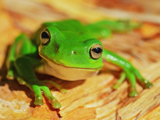 Should You Eat a Live Frog or Cake for Breakfast?