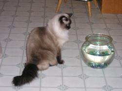 mickeys+fish2