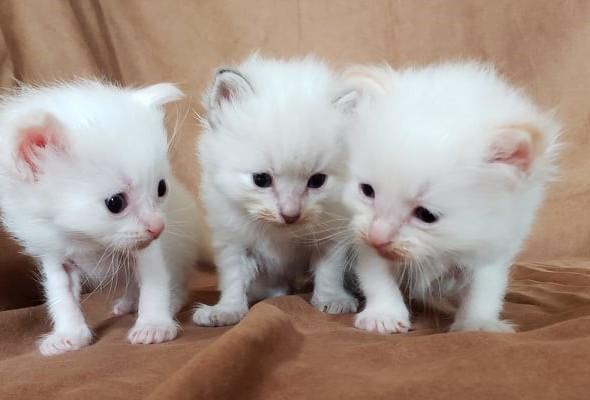 3 kittens July 12