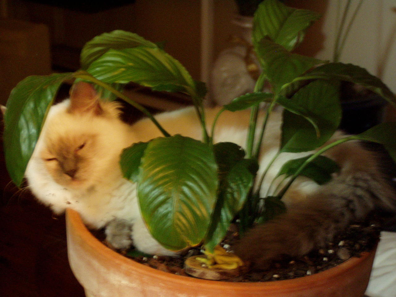 Sophie+in+her+plant
