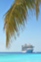 Palm tree and cruise ship in background