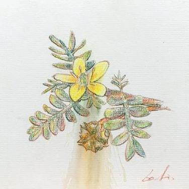 Gatis Cirulis