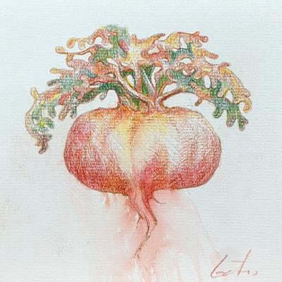 Lepidium Meyenii