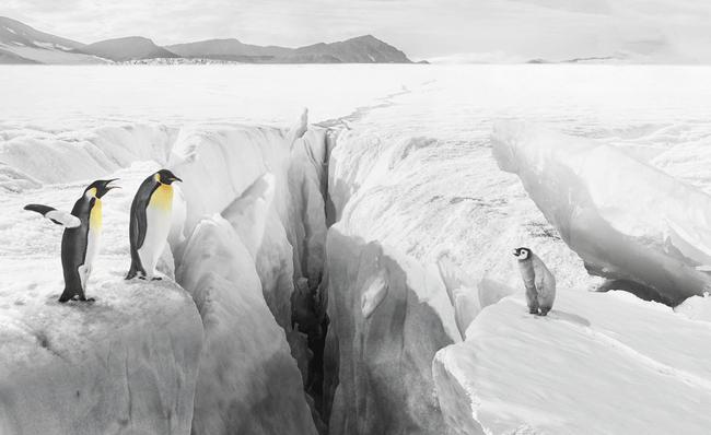 GLB_bildmontage_pinguine_rgb.png