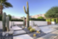 pspalms-cactus.jpg