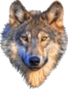 png-wolf-head-big-image-png-1764.png