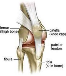 knee_anatomy.png
