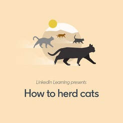 LLS_Static_Cats_1.jpg