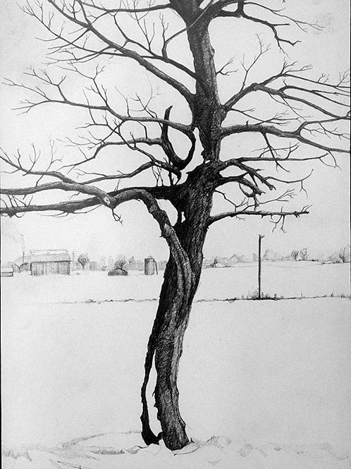 The Dead Tree in Michigan