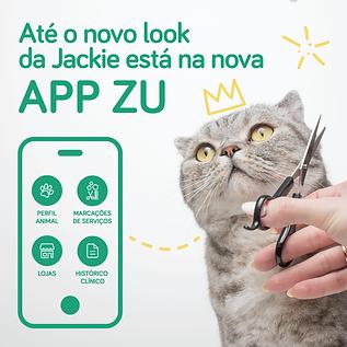 destaque_appZU-01.png