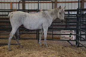WC Fair- Horse.jpg