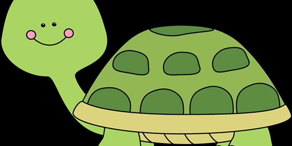 Tiny Turtles Winter Session