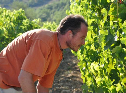 ローヌの超自然派 - グレゴリーギョームのワイン造り