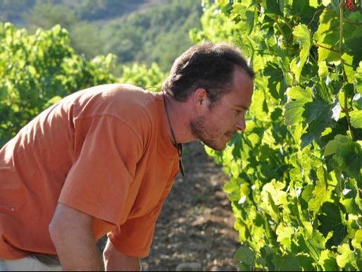 元洞窟探検家 - グレゴリーギョームのワイン造り(ローヌ)