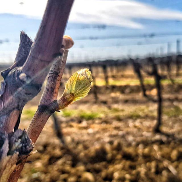 自由が丘ワイン 自然派ワイン ワインショップ