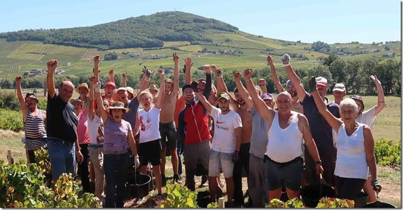 ブドウ|収穫|ワイン造り|ボージョレ