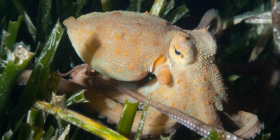 Soirée biologie marine