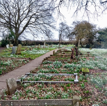 Snowdrops in Huntington Church graveyard