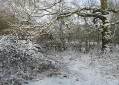Snow balances delicately…