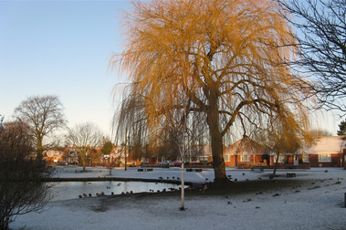 Wigginton pond
