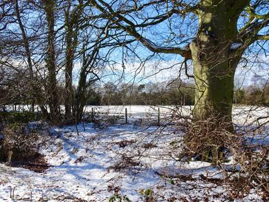 Snow covered farm field