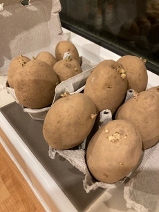 Grow your own potataoes…