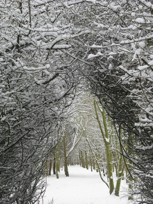 Snow-covered trees form an archway…