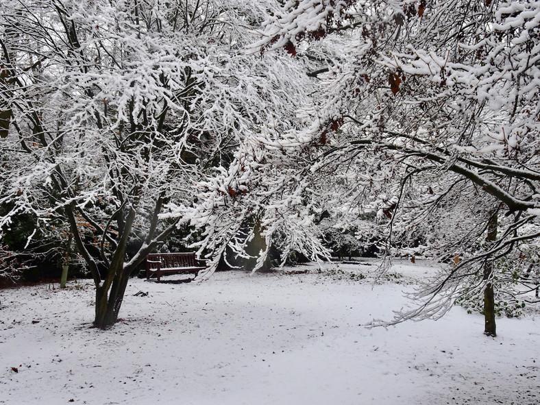 Snow-laden trees in Westfield Wood…