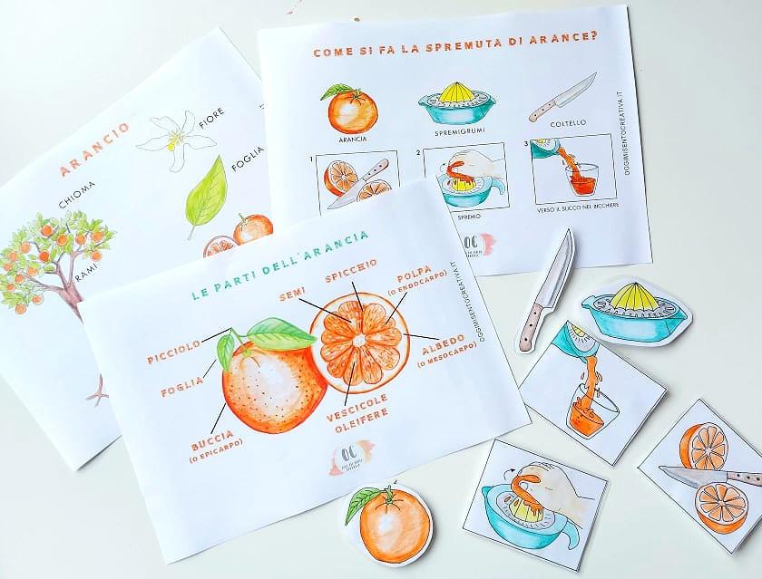 scheda didattica arancia