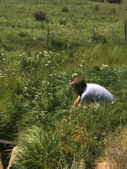 Justen Picking Natures Herbs